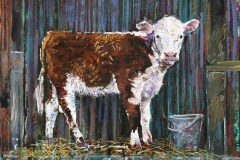 Alex-willaims-calf-with-bucket
